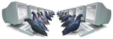 Google PigeonRank