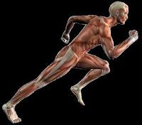 anatomia-atletismo