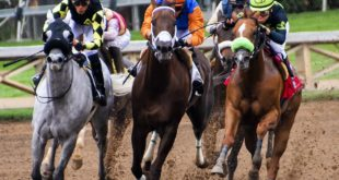 apuestas deportivas caballos